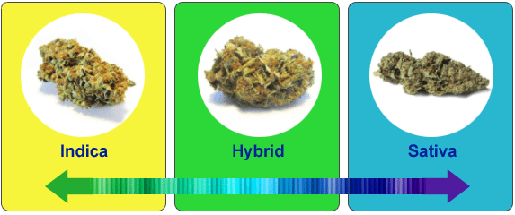 Chat of strains