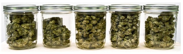 Curing Cannabis in jars