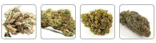 strains of cannabis